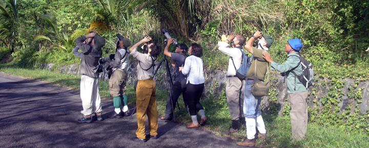 North Sulawesi Bird Watching